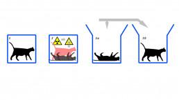gato schrodinguer comunicación